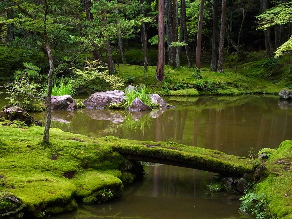 Японский сад мхов — чудо под ногами