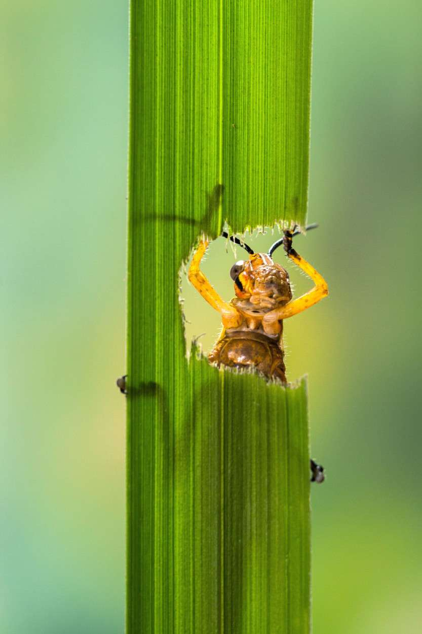 Hungry GrassHopper