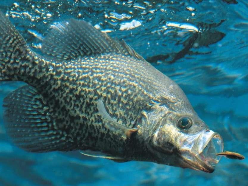 Ловим хищную рыбу