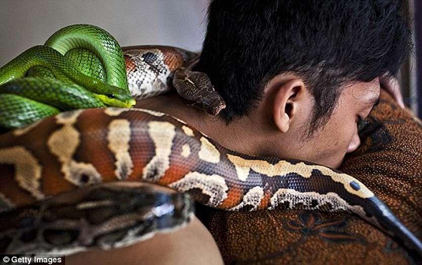 106612947_large_snakemassage01