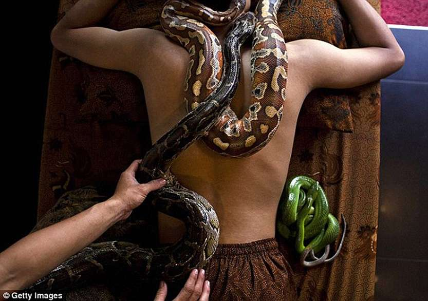 106612952_large_snakemassage02