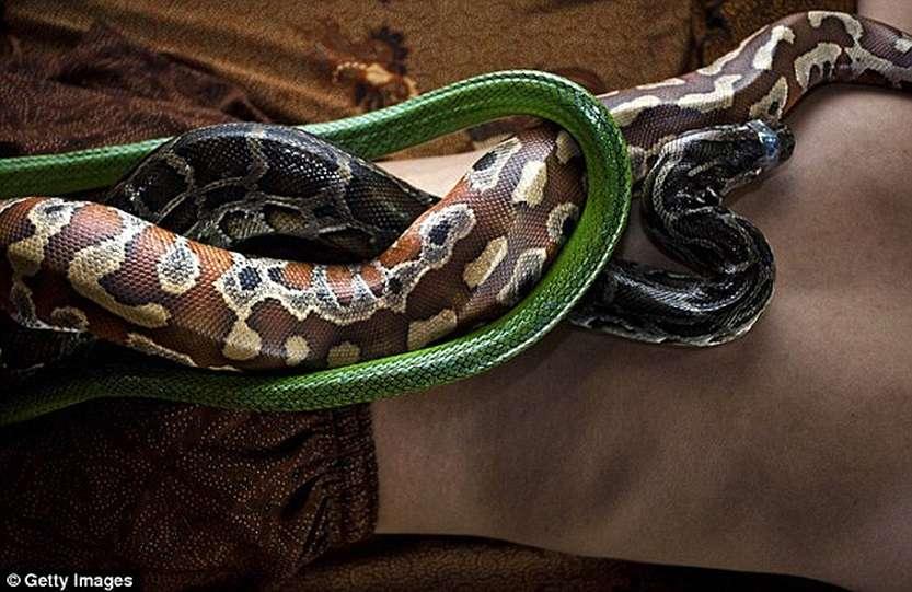 106612962_large_snakemassage06