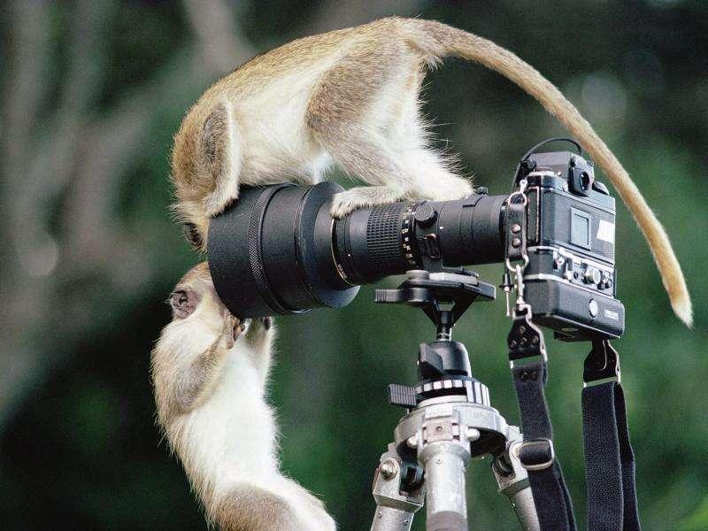 Можно ли научиться искусству фотографии?