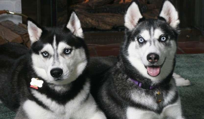 Влияет ли корм на характер вашего пса?