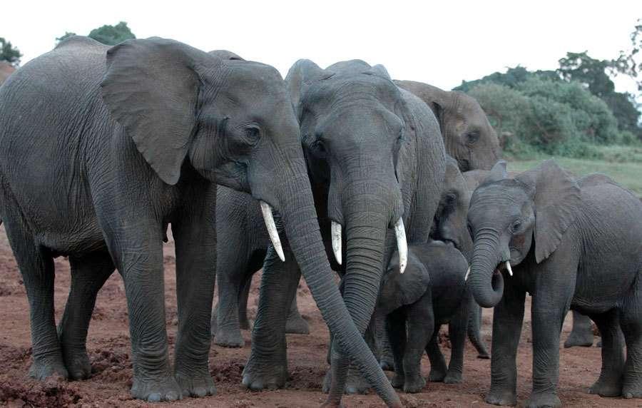 вам если слоны в южной америке фаза луны для