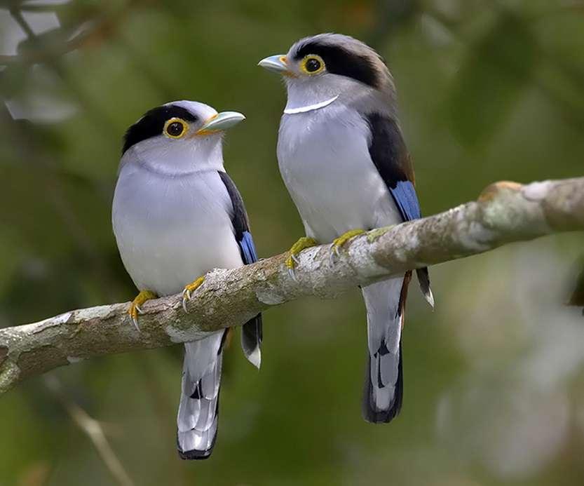 Colibri_45