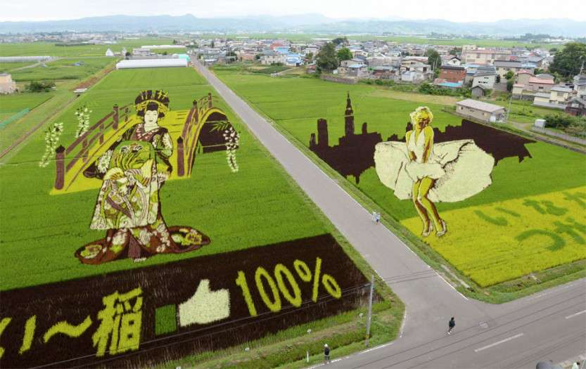 rice-field-art-japan