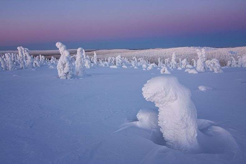 Frozen_Trees_of_the_Arctic_02
