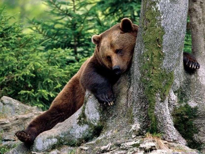 Охота на «хозяина тайги»