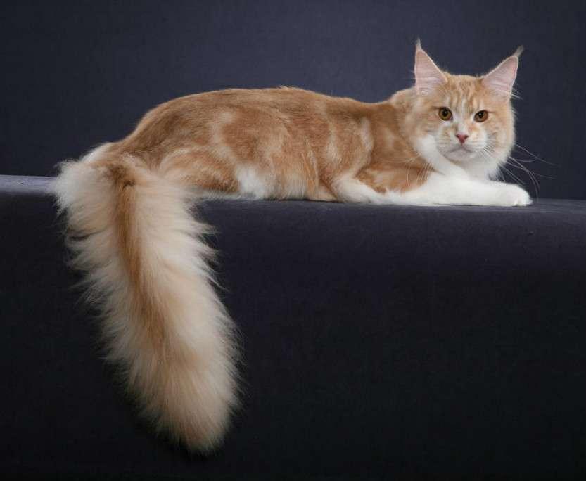 Самая уникальная порода кошек