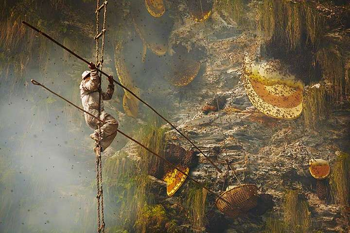 Honey hunter collecting from cliff face, Nepal