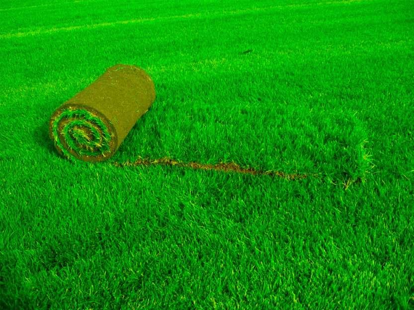 Что из себя представляет искусственный газон?