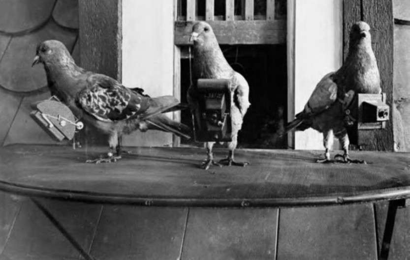 Голуби-фотографы и их роль в истории