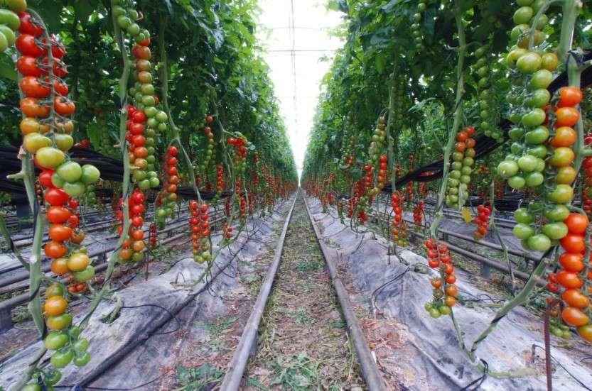 Растения из Европы по всей России